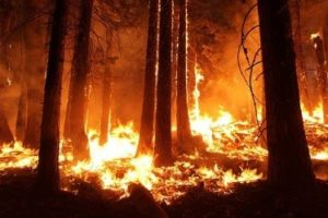 California wildfires affect water quality